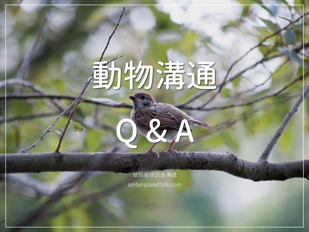 動物溝通 Q and A